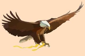 bald-eagle-