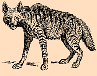 hyena, San, Bushmen, stories, myth, folklore, mother tongue, Botswana, The storyteller, Yeyi