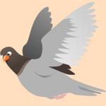 squab-151212_640
