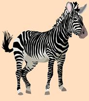 zebra-152604_640